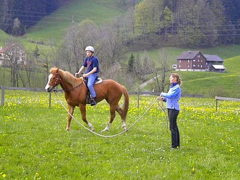 Learning the ropes of Natural Horsemanship