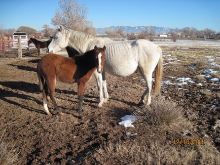 Baca Chica Horses in need of rescue