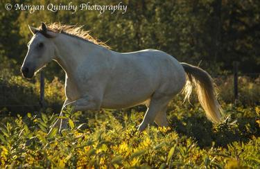 Meet Our Horses - Spanish Mustangs