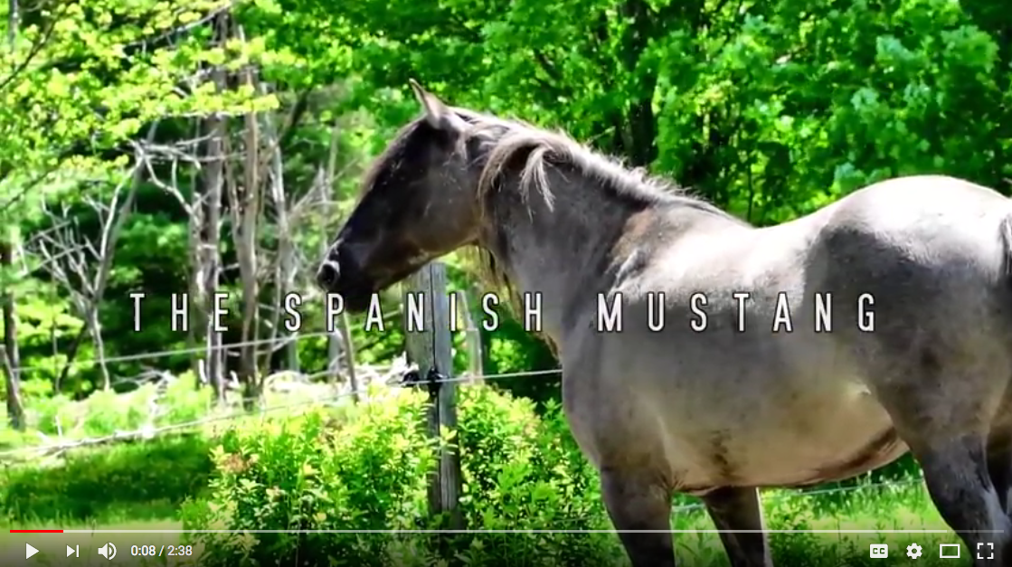 Video link to About Spanish Mustangs Video
